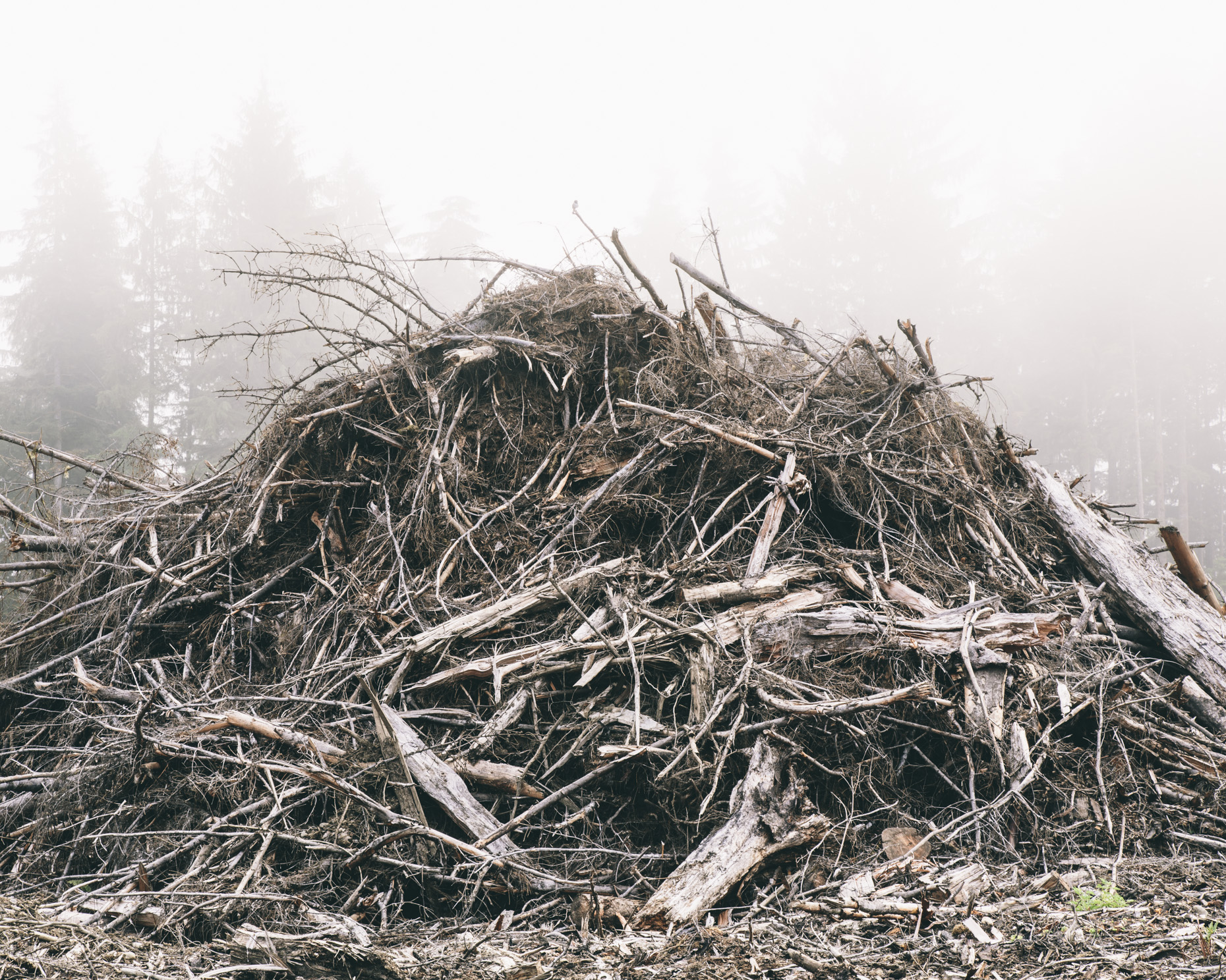 Debris pile from clearcut, Olympic Peninsula, WA - Paul Edmondson